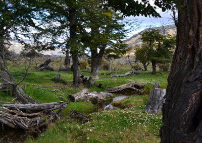 laguna-sofia-into-the-wild-patagonia6