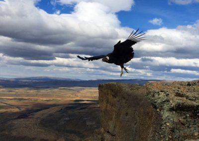 into-the-wild-trekking-mirador-condores-05